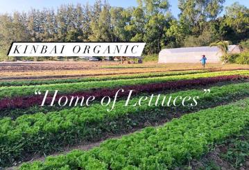 Kinbai Organic